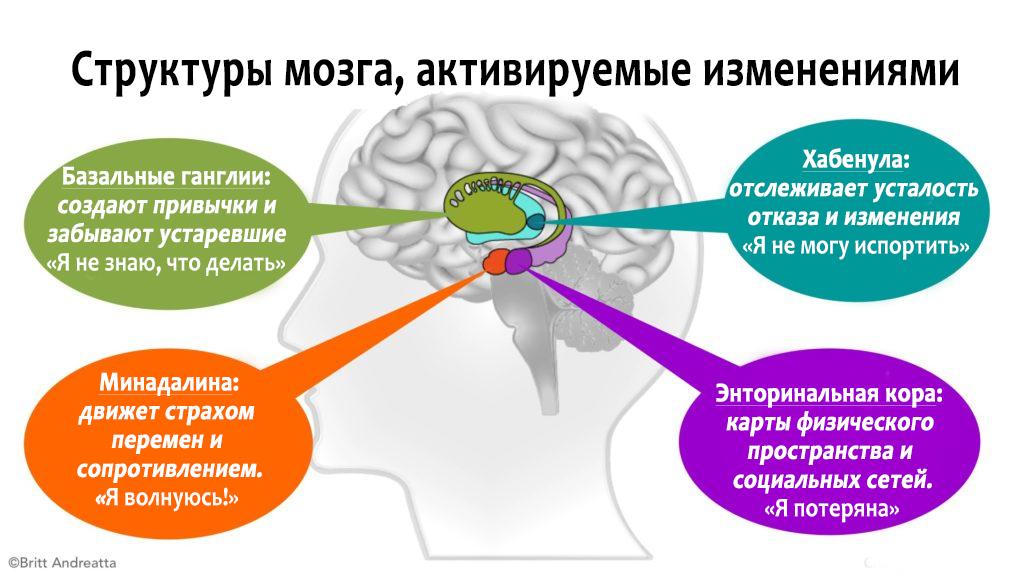 Структуры мозга активируемые изменением